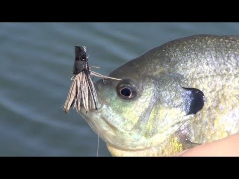 Panfish Porn – Fly Fishing for Bluegill Bream on Fly