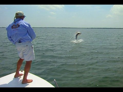 The Tarpon – EPIC FLY FISHING battle on the flats