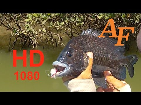 Fly Fishing Black Bream Pikey Bream Sight Cast Andysfishing Good Fish Flyfishing Ep.73