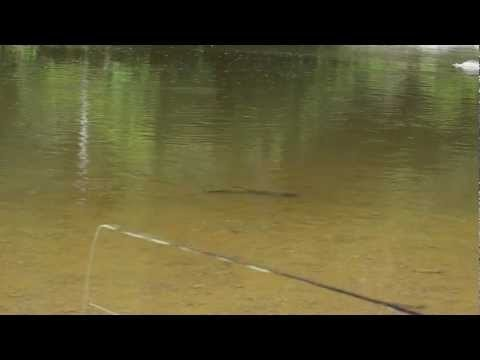 Freshwater flats fly fishing for Carp