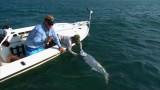 Poontastic – FLY fishing for TARPON in Islamorada