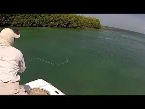Cuba cayo santa maria tarpon fly fishing