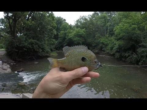 Fly Fishing Creek for Bluegill, Creek Chubs, Green Sunfish, Panfish, Longear – 2015