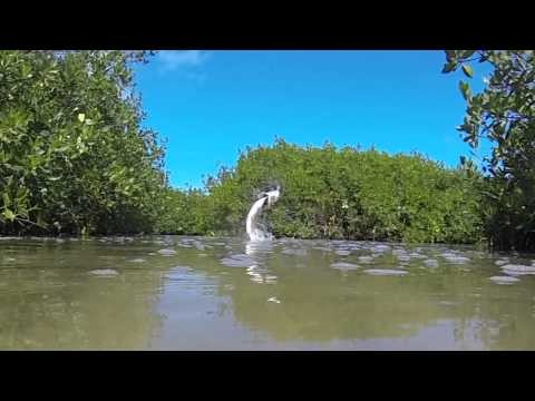 Fly Fishing for Tarpon: Holbox Mexico with The Sandflea