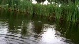 Fly fishing crappie. (Must watch).