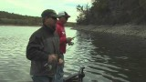 BASS FLY FISHING WITH ARTICULATED STREAMERS