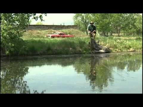 Fly Fishing Colorado – May – Bass & Bluegill