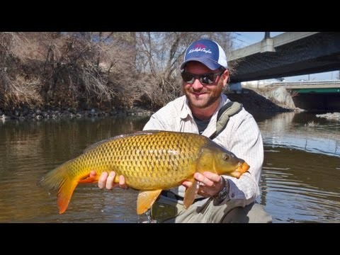 Carp Fly Fishing – South Platte River Denver