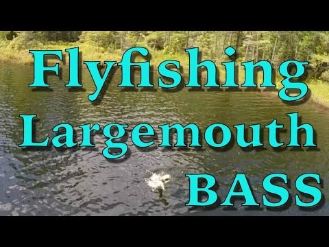 Largemouth Bass: Fly Fishing in Northern Wisconsin