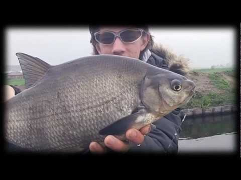 Flyfishing for carp and bream