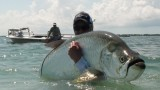 Huge Tarpon Caught On Fly