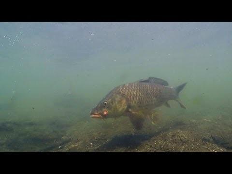 Fly Fishing for Carp in Urban Stream / フライフィッシングで釣るコイ