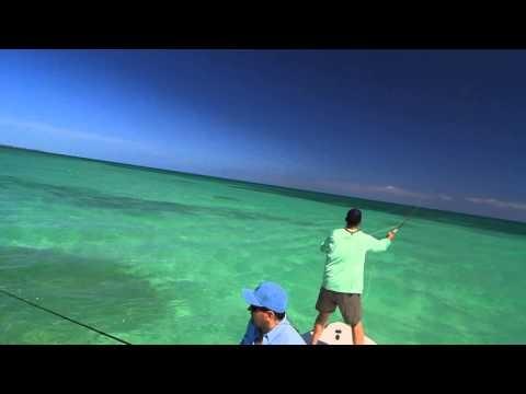 Tarpon school, Marathon Florida Keys – fly fishing