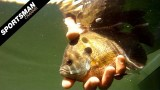 Texas Fly Fishing: Bluegills