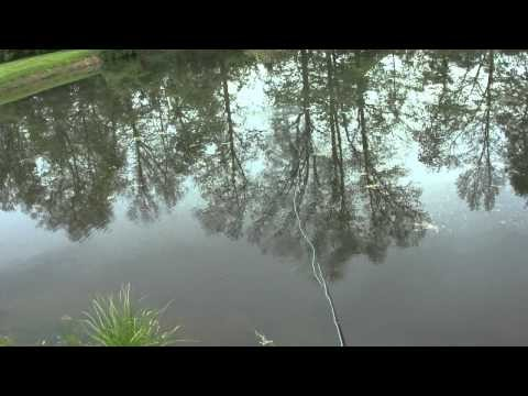 fly fishing for bluegill