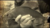 How to Fly Fish for Grayling – The Chalk Stream