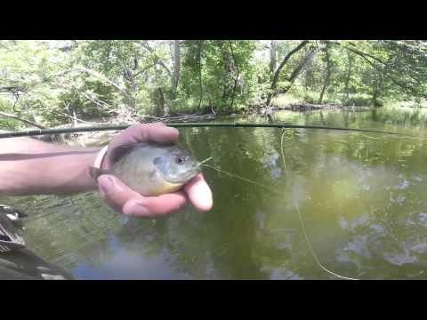 Bluegill Alley – Topwater fly fishing in the Texas Hill Country