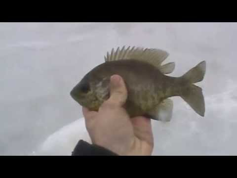 Ice Fishing in the Rain – Bass, Pike and Panfish