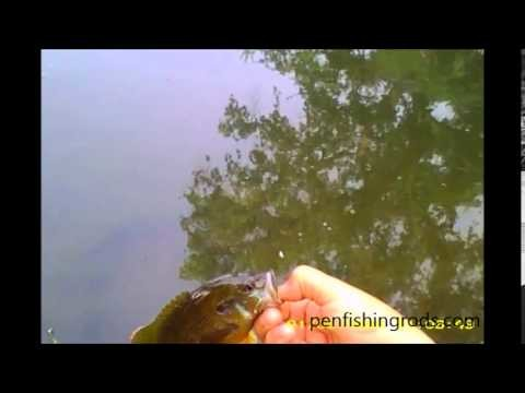 Fly Fishing For Panfish by penfishingrods.com
