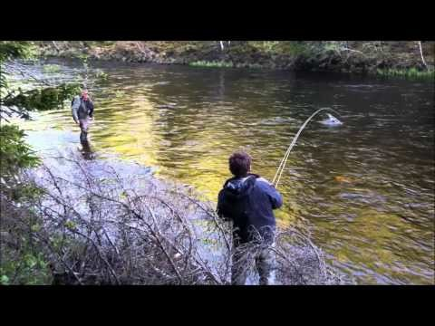 Frontside Salmon – Insane fly fishing evening in Sweden – frontsidefly