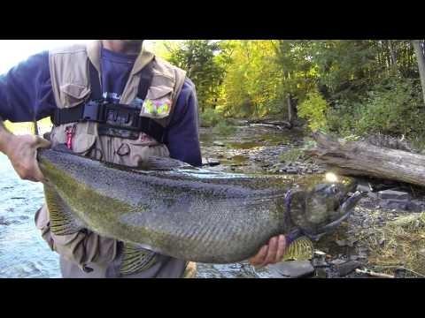 Salmon River Pulaski NY Flyfishing (GoPro)