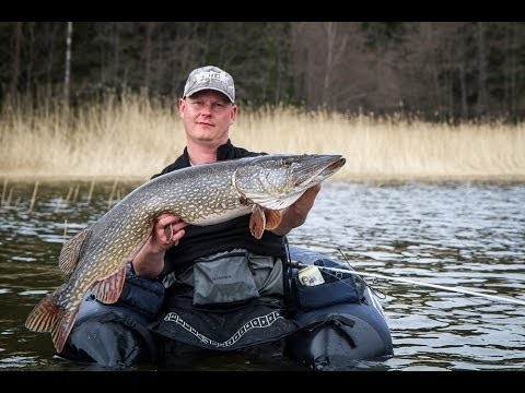 Pike fly fishing in finland 2013