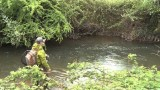 Fly Fishing Small UK Rivers for Big Trout –  The River Tone, Somerset