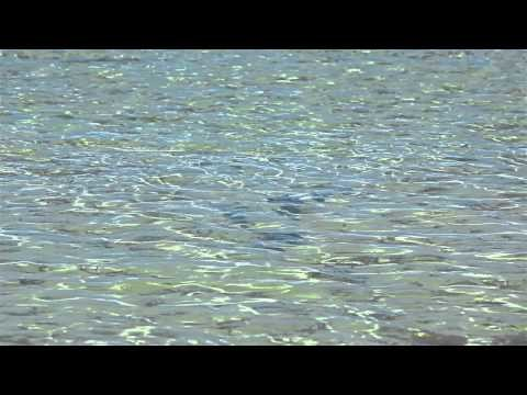 Saltwater Fly Fishing – Bonefish, Permit, Tarpon – Red Truck Fly Rods – Explore