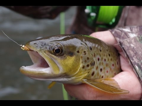 New For 2015! Central PA Winter Trout Fishing/Non Stop Action!