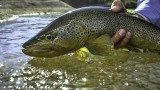 Green Envy – Fly Fishing Utah's Green River