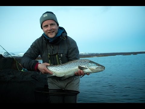 Iceland 2015, fly fishing in lake thingvellir