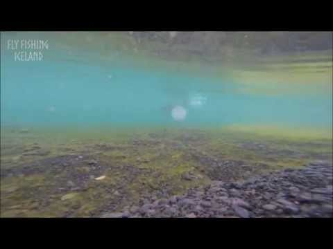 Monster Trout Fishing,Fly Fishing Iceland