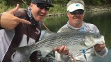Fly Fishing Striped Bass Ft. Maury Hatch on the American River