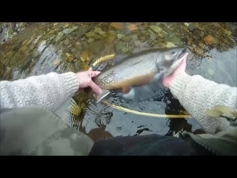 Flyfishing Maine – Fall 2013
