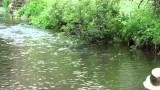 UpstreamDryFly- Tips for dry fly Fishing