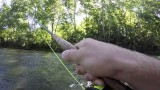 Fly Fishing For Brown And Rainbow Trout