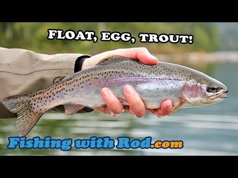 Fishing with Rod: Float, Egg, Trout!