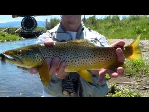 Jeff & Marlowe Fly Fishing in Missoula Montana – Very Large Streamers on the Menu that Day…