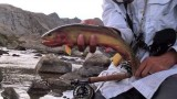 Golden Trout on the Fly -A Backpacker's Quest