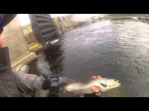 Fly Fishing For Landlock Salmon | Moosehead River Maine | GoPro 3