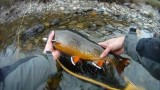 Big Brook Trout