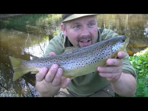 #4 – Dry Fly Fishing – Early Season Brown Trout