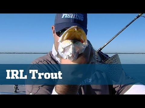 Solid Light Tackle Trout Fishing On Grass Beds In The Indian River