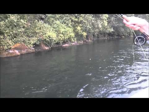 McKenzie River Fly Fishing:  Hook Sets & Airs