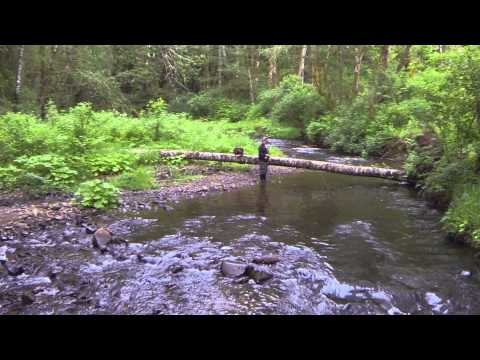 Western Oregon Fly Fishing with Bigfoot!